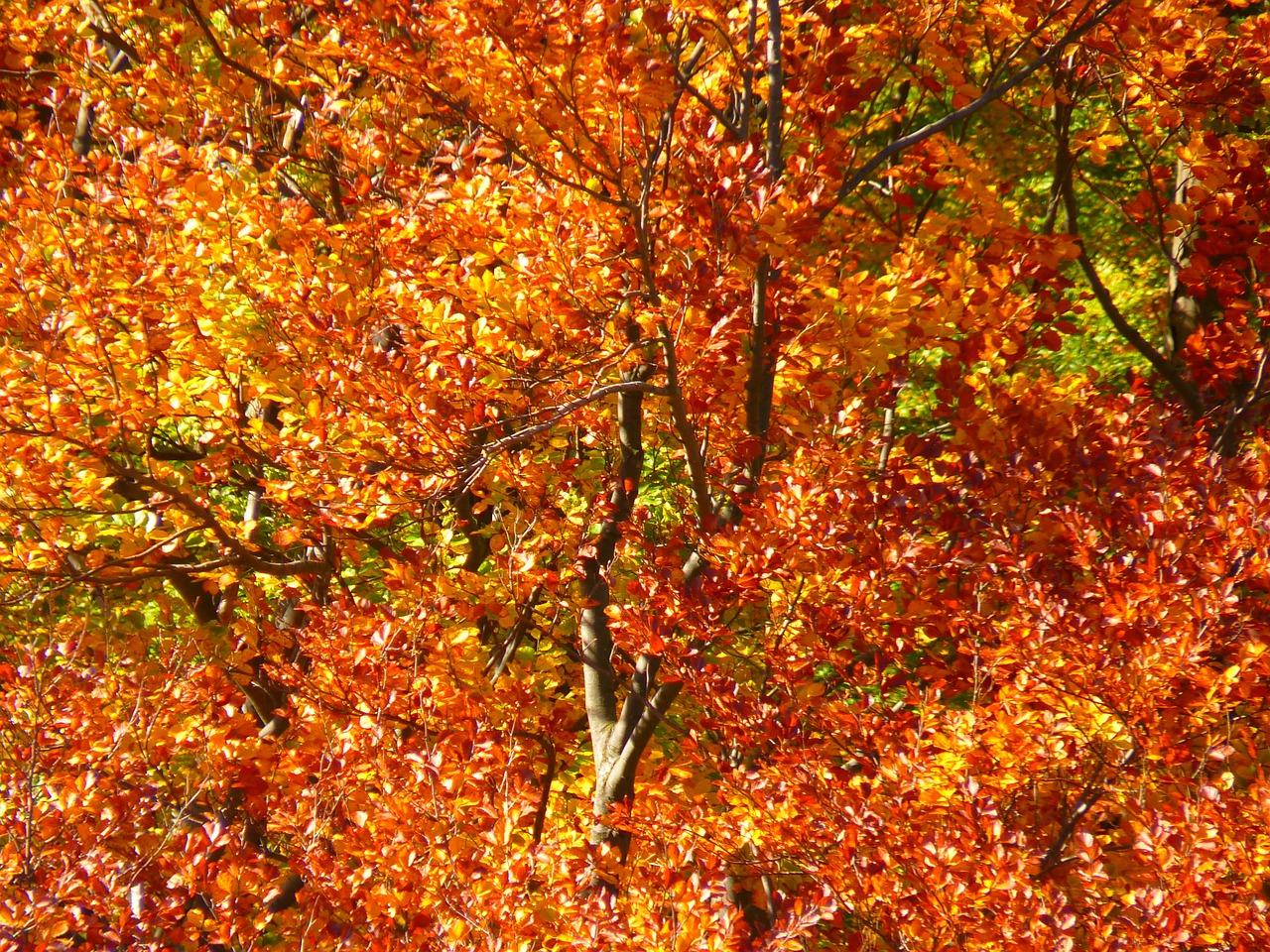 Herbst-Deko aus Kreativ-Beton selbst herstellen